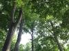 Bild 10 Blick in Baumkronen