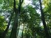 Bild 9 Blick in Baumkronen